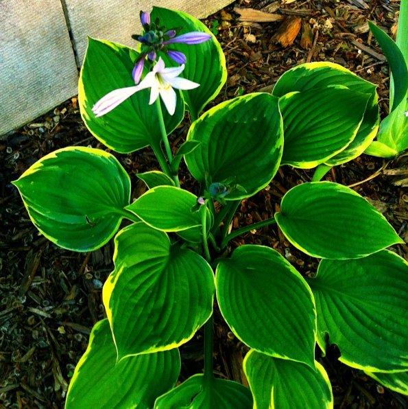 Flower shot 6/7/12