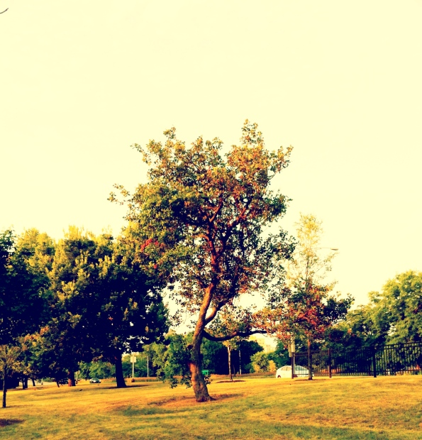 Lincoln Park 06-26-12