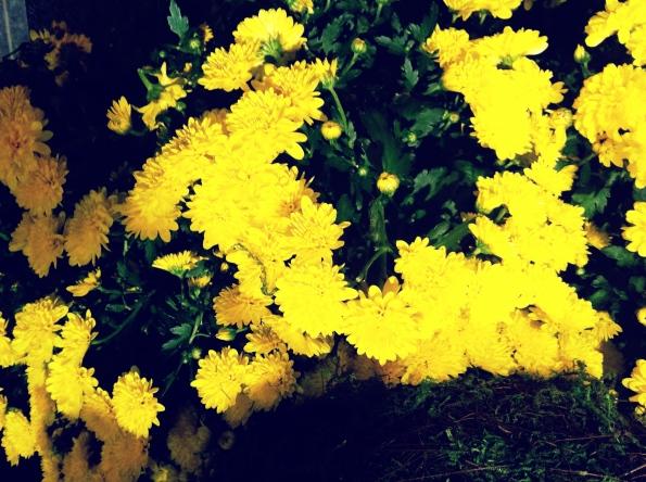 Random Flower Shot 16