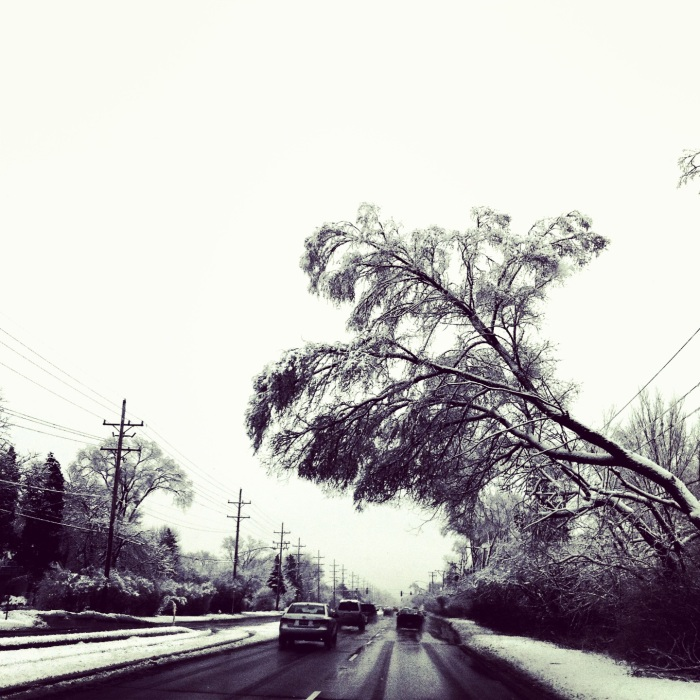 Frozen Trees II