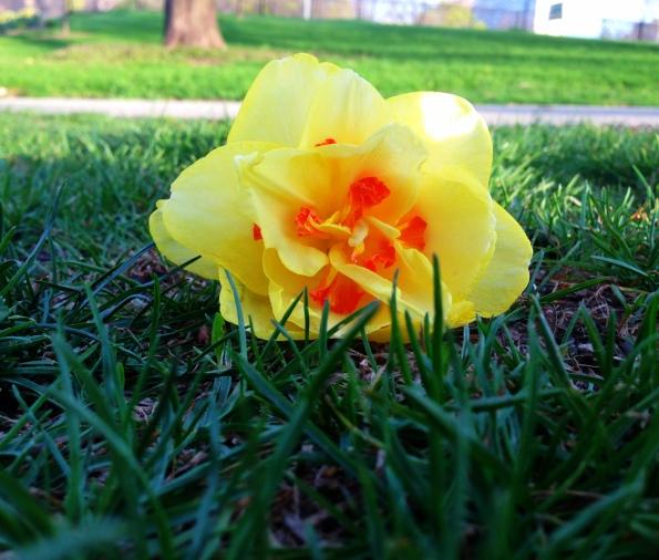 Random Flower Shot 48
