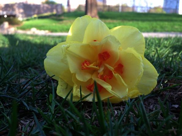 Random Flower Shot 49