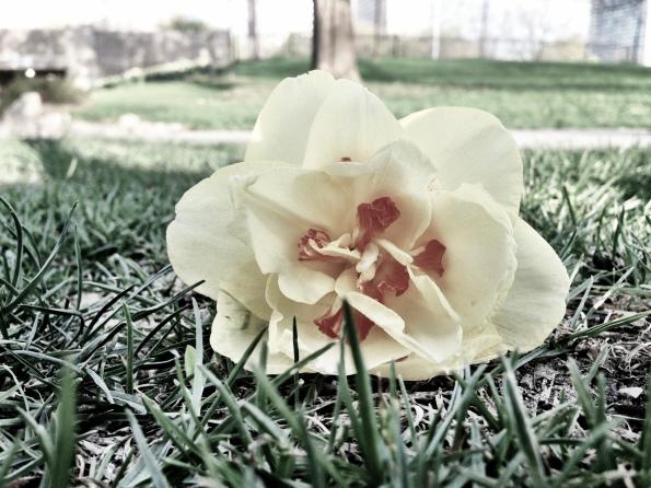 Random Flower Shot 50