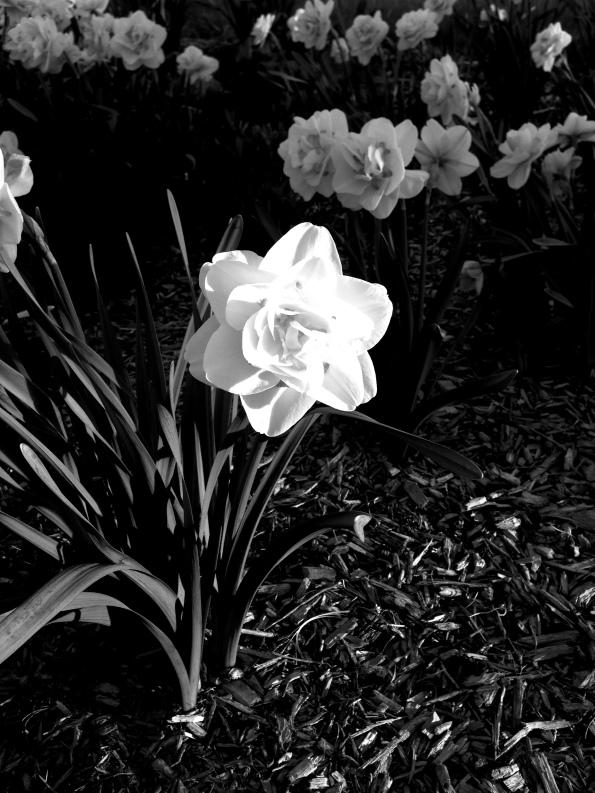 Random Flower Shot 51