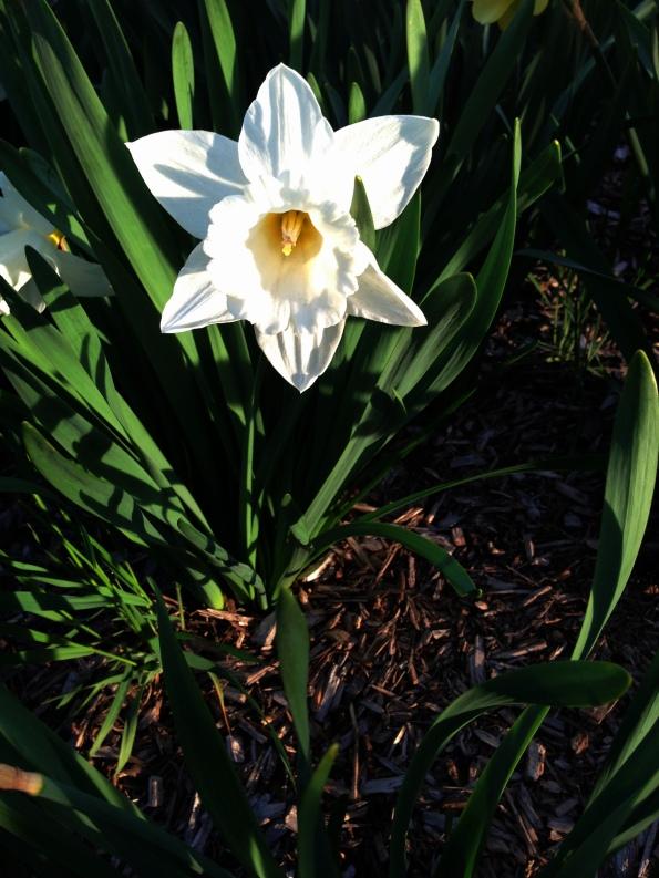Random Flower Shot 52