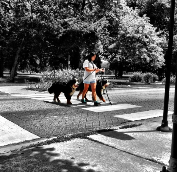 Big Ass Dogs Colorsplash