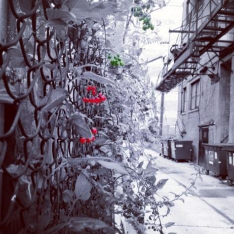 Red Berries Colorsplash edit